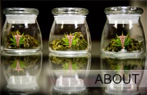 Medical Marijuana | Kush Tourism