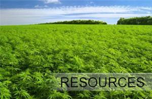 Marijuana Field | Kush Tourism