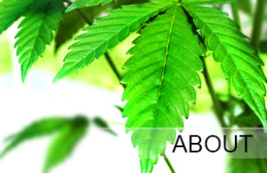 Marijuana Leaf | Kush Tourism