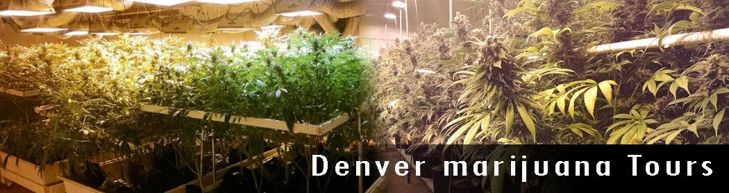 Denver-Marijuana-Tours