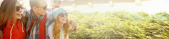 Colorado Marijuana Tours Amp Denver Vacation Packages Kush