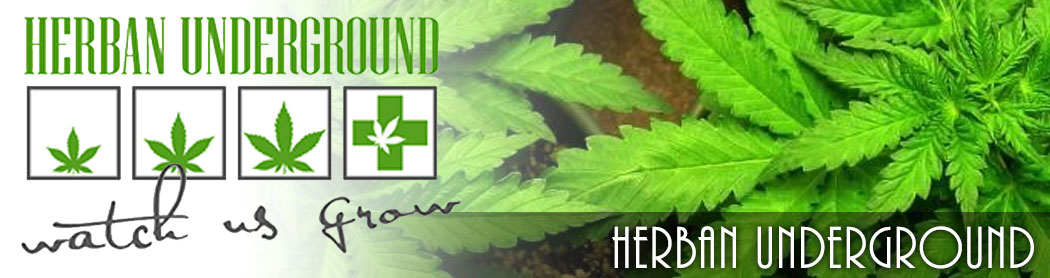 herban_undergroudn_denver_recreational_marijuana