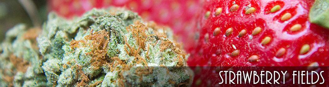strawberry_fields_pueblo_recreational_marijuana
