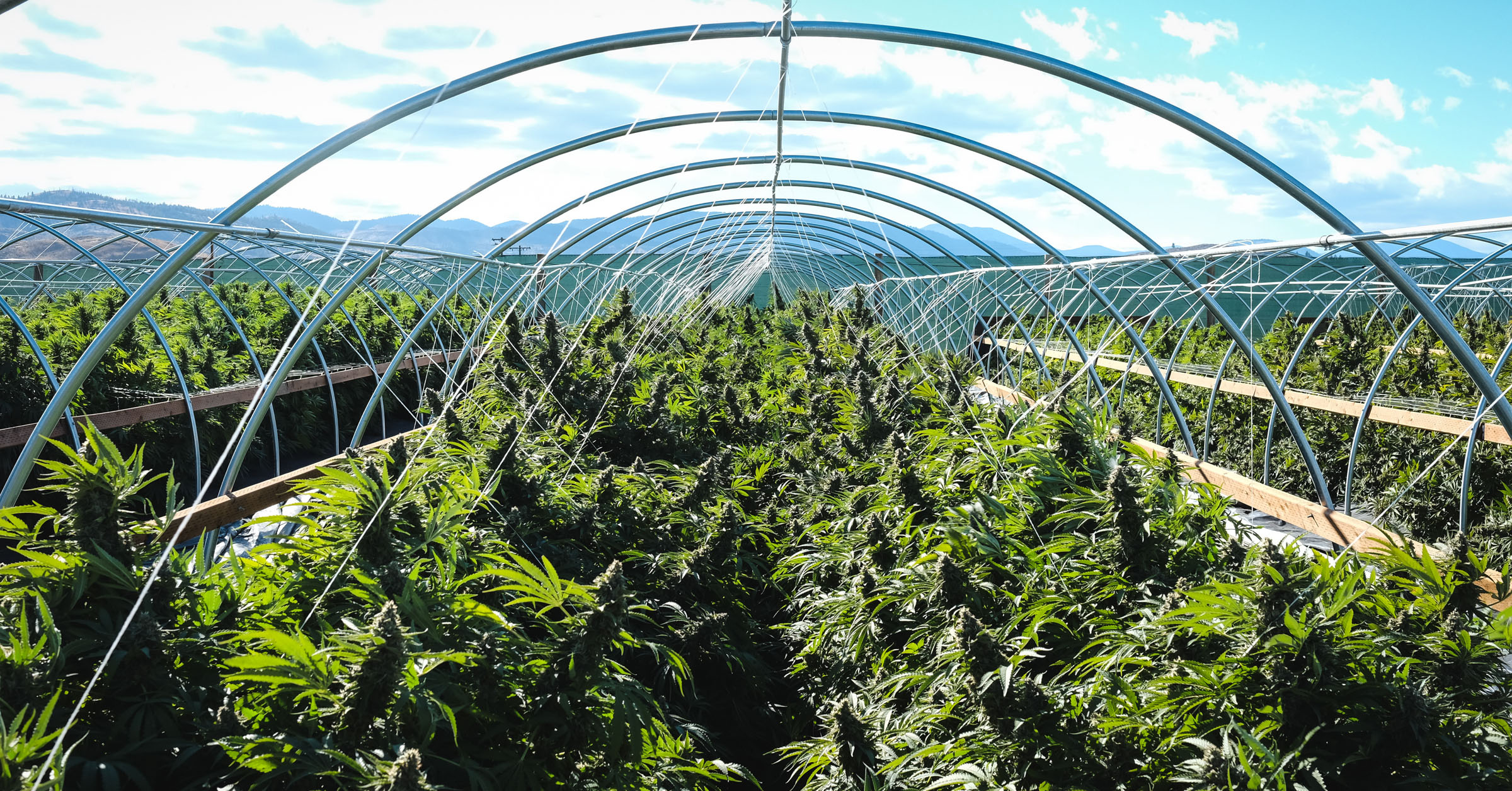 Legalization Updates California Farm Is On Kush Tourism