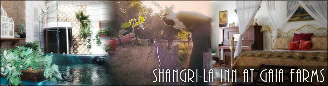 Shangrila_inn_cannabis_friendly_ft_collins