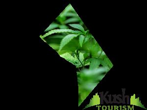 DC Kush Tourism