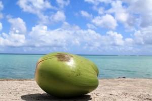 Guam coconut-1179414_960_720