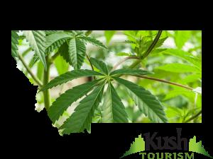 Montana Kush Tourism