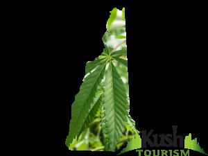 New Hampshire marijuana