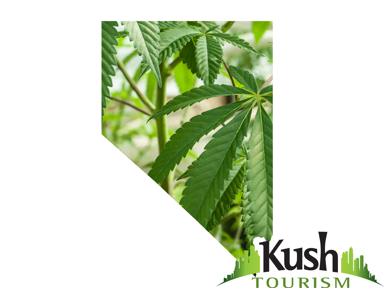 Is Weed Legal In Las Vegas Nevada Marijuana Information Kush - Us weed legalization map 2017