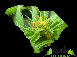 South Carolina Kush Tourism