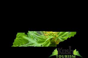 Tennessee Kush Tourism