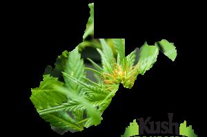 West Virginia Kush Tourism