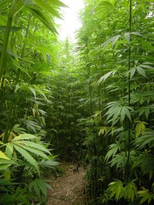 is smoking weed legal in alaska