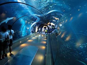coast-aquarium