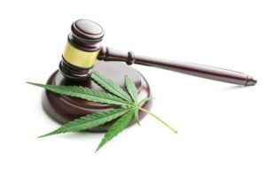 44186145 - the cannabis leaf and judge gavel